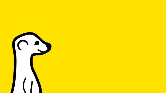 meerkat-1280x720-feature