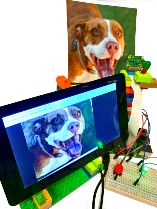 TensorFlow sample identifying a dog's breed (American Staffordshire terrier) on a Raspberry Pi 3 with camera