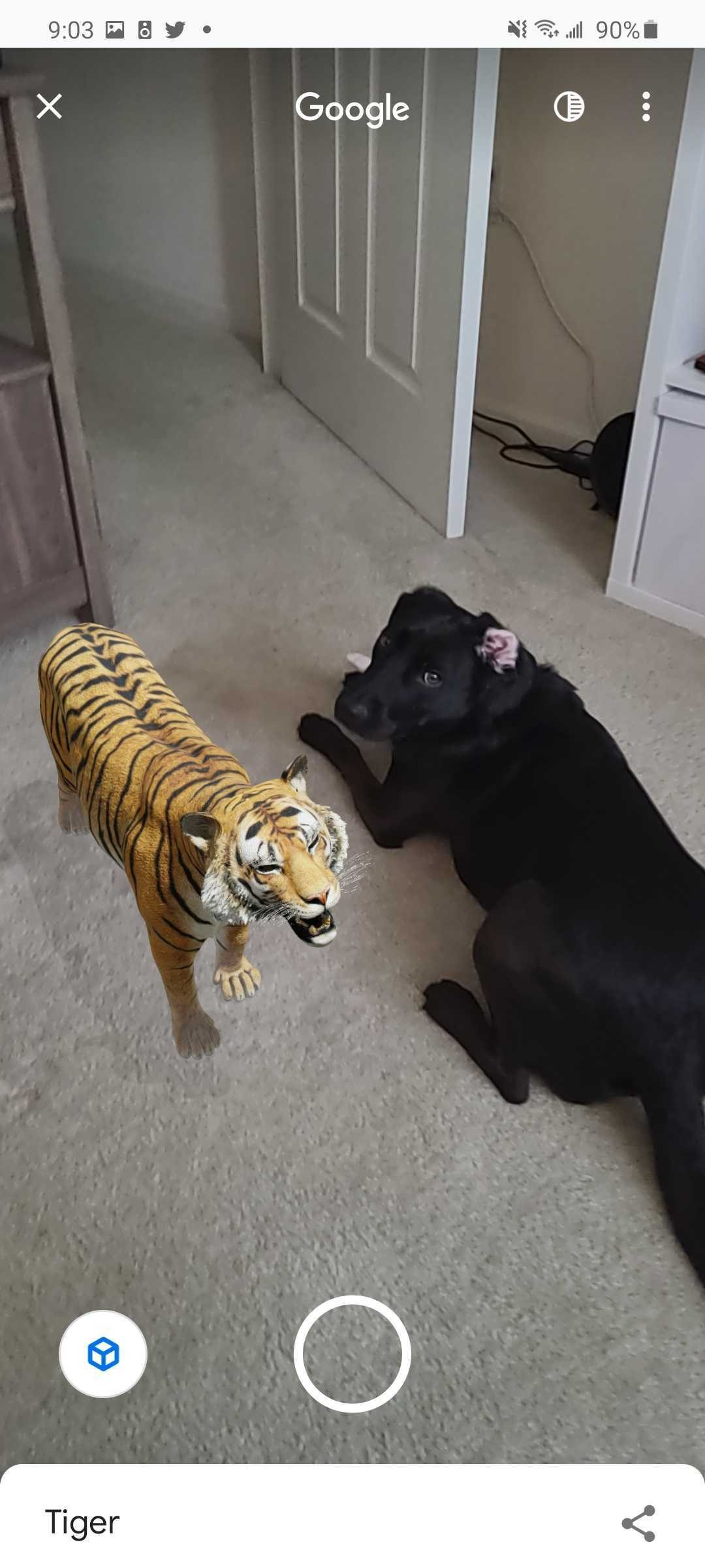 google 3d animals tiger view in your space tiger