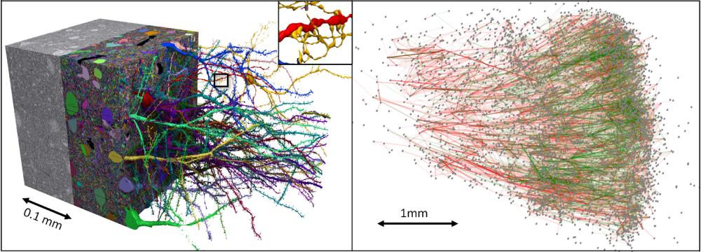 Google human brain map